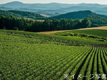 愛知県安城市×お茶/法人【35027】-1