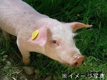 香取市×養豚/法人【3465】-top