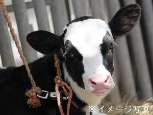 静岡県富士宮市×酪農/法人【35033】-top