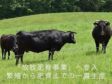 佐賀県鹿島市×肉牛/法人【35039】-top