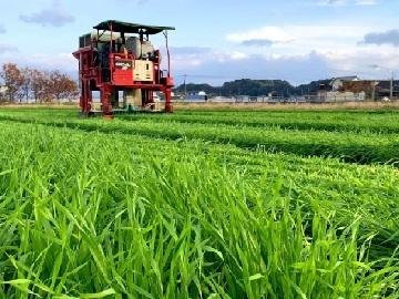 福岡県八女市×お茶/法人【35044】-top