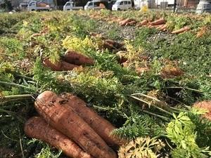 徳島県神山町×野菜/法人【35049】-top