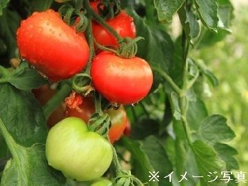 長野県中野市×野菜/法人【35061】-top