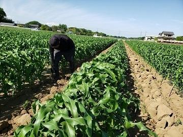 JAPAN AGRI DESIGN株式会社-4