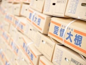 鹿児島県東串良町×露地野菜/法人【35067】-2