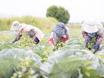 鹿児島県東串良町×野菜/法人【35067】-top
