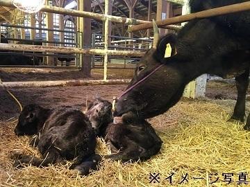 北海道幌加内町×肉牛/法人【35153】-2