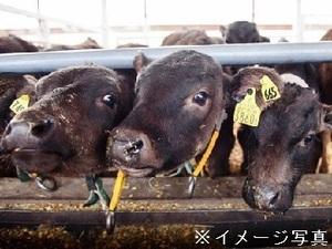 北海道幌加内町×肉牛/法人【35153】-top