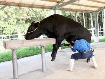 鹿児島県南さつま市×肉-2牛・酪農/法人【35169】