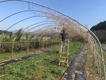 佐賀県武雄市×稲作・野菜/法人【35171】-2