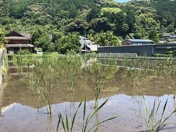 佐賀県武雄市×稲作・野菜/法人【35171】-3