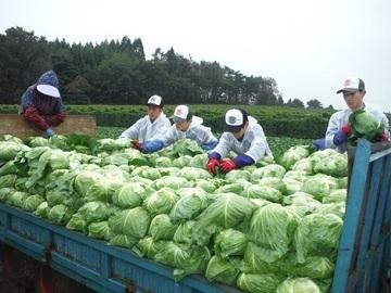 株式会社ひかり農園-4