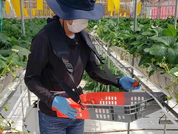 農業生産法人リコペル-1