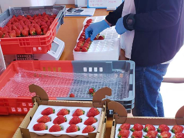 農業生産法人リコペル-2