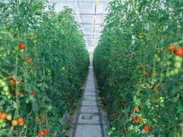 農業生産法人リコペル-5