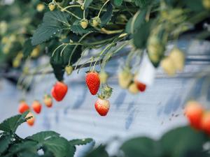 農業生産法人リコペル-top