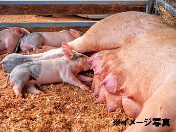 三重県×養豚/法人【2273】