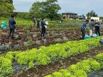 宮城県川崎町×野菜/法人【35182】-2