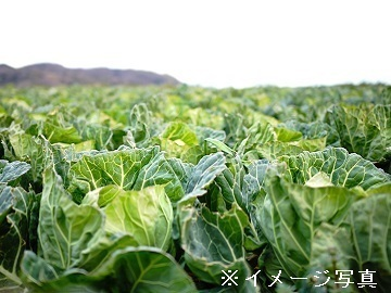 群馬県長野原町×露地野菜/個人【35186】-top