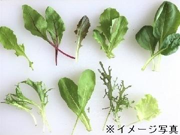 兵庫県丹波市×野菜/法人【35210】-top