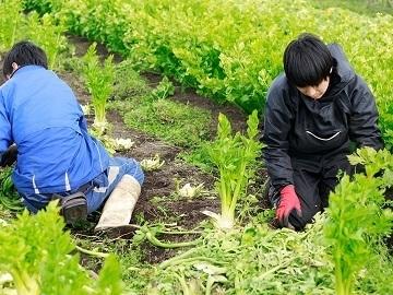 株式会社むかし野菜の邑/佐藤自然農園-4