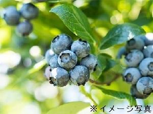 宮崎県小林市×野菜/法人【35244】-top