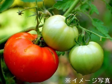 山形県川西町×施設/法人【35254】-top