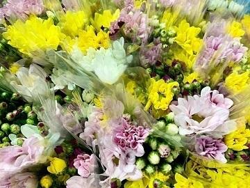 福岡県嘉麻市×花・観葉/法人【35272】-1