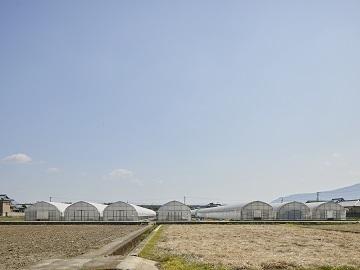香川県丸亀市×野菜/法人【35337】-2