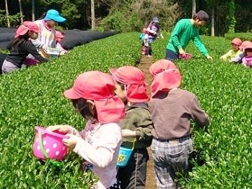 鹿児島県志布志市×お茶・野菜/法人【35356】-4