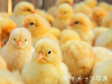 兵庫県・鹿児島×養鶏/法人【35168】-top
