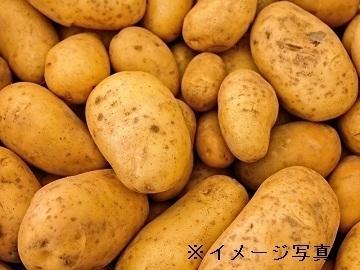 北海道倶知安町×露地野菜/法人【35375】-top