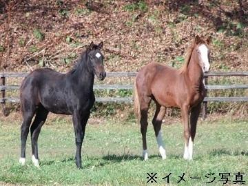北海道日高町×競走馬/乗馬クラブ【35438】-top