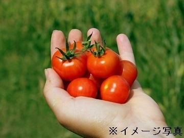 茨城県常総市×野菜/法人【35444】-top