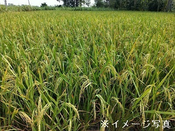 兵庫県丹波篠山市×稲作・露地野菜/個人【35474】-2