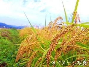 兵庫県丹波篠山市×稲作/個人【35474】-top