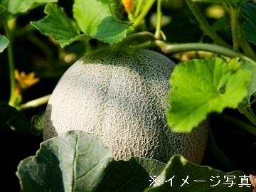 茨城県鉾田市×果樹・野菜/個人【35484】-top