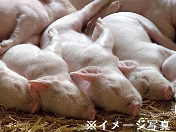 栃木県日光市×養豚/法人【35519】-top