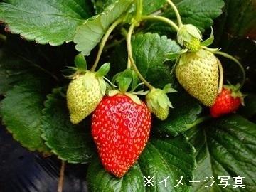 東京都瑞穂町×野菜・お茶/法人【35522】-top
