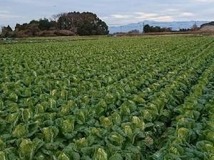 熊本県菊陽町×露地野菜/法人【35528】-top