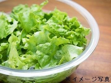 群馬県板倉町×野菜加工/法人【35327】-top