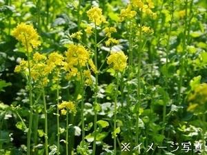 千葉県南房総市/露地野菜×法人【35575】-top