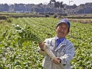 長崎県×露地野菜/法人【35577】-2