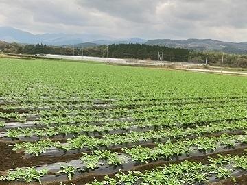 渡辺農園-3