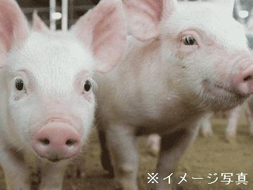 愛知県田原市×養豚/法人【35603】-top
