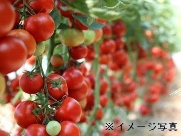 北海道仁木町×施設野菜/法人【35611】-top