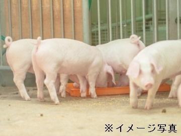 茨城県城里町×養豚/法人【35615】-top