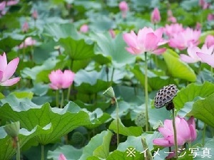 茨城県守谷市・常総市/露地野菜×個人【35617】-top