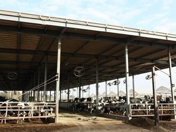 農業生産法人 有限会社若林牧場-2