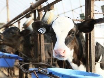 農業生産法人 有限会社若林牧場-3